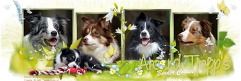 Kennel 'Around Tjopp's Broder Collies'